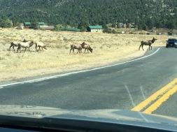 Elk Crossing 1