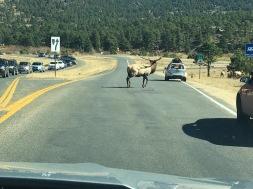 Elk Crossing 2